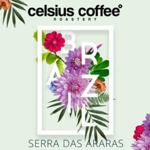 Brezilya Serra Das Araras Filtre Kahve