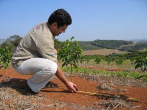 Brezilya Samambaia Filtre Kahve2